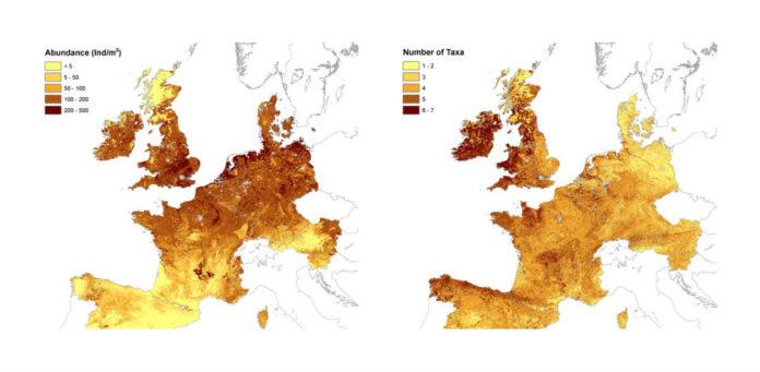 O mapa das miñocas en Europa reflicte Galicia con pouca presenza e moita variedade.