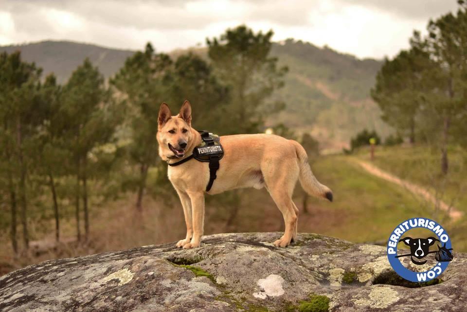 Os cans terán a súa propia ruta no PAAR.
