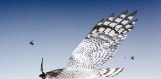 Recreación do drone aviario que lanzará a empresa viguesa Fobos.