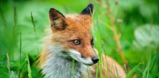 O traballo sobre 250 animais revela baixos niveis de metais pesados nos seus órganos internos