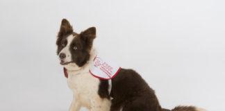 A cadela Yuca axuda aos investigadores para desenvolver métodos máis precisos e menos invasivos para detectar o cancro de próstata.