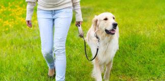 A amizade entre cans e humanos naceu dúas veces e en dous continentes.