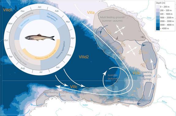 Unha ferramenta que prognostica as flutuacións de peixe azul de cada tempada de pesca.