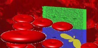 A innovación dos investigadores de Vigo e Boston permite obter imaxes a gran escala de glóbulos vermellos.