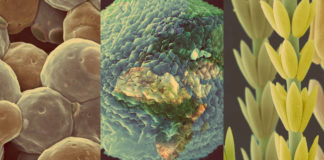O MUNCYT inaugura a exposición de fotografía científica FOTCIENCIA13.