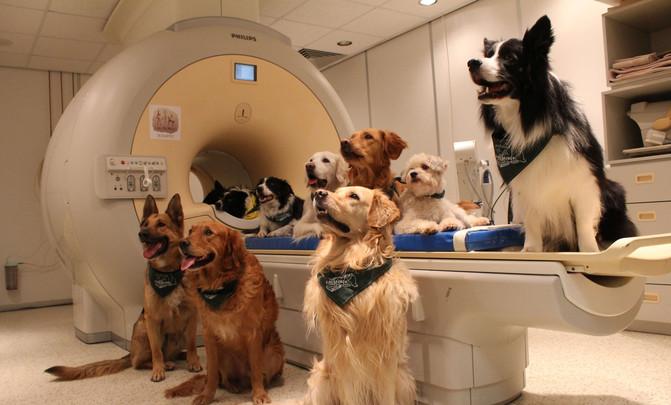 Os 13 cans adestrados ao que se lle realizou unha resonancia magnética para o estudo. /Enikő Kubinyi.