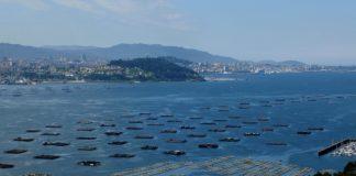 Bateas na ría de Vigo.