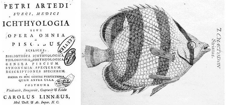 Exemplos do traballo de Ardetii. Fonte: http://maritimo.blogspot.com.es/