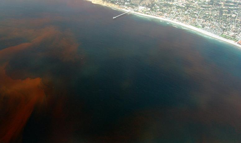 As mareas vermellas afectan de xeito periódico ás costas galegas.