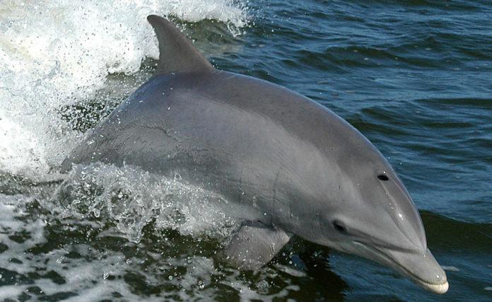 Os estudos realizados ata o de agora noutras zonas suxerían que as bateas diminuían a presenza de arroaces.