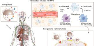 Esquema do funcionamento das nanopartículas no corpo humano.