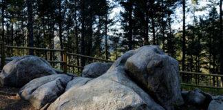 "Vista da ""manada de cervos de Excalibur"", na zona do Outeiro de Chan da Isca. Foto: PAAR de Campo Lameiro."