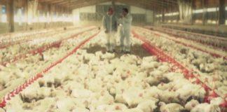 Imaxe dunhas das granxas coas que traballa Sinergia G6.