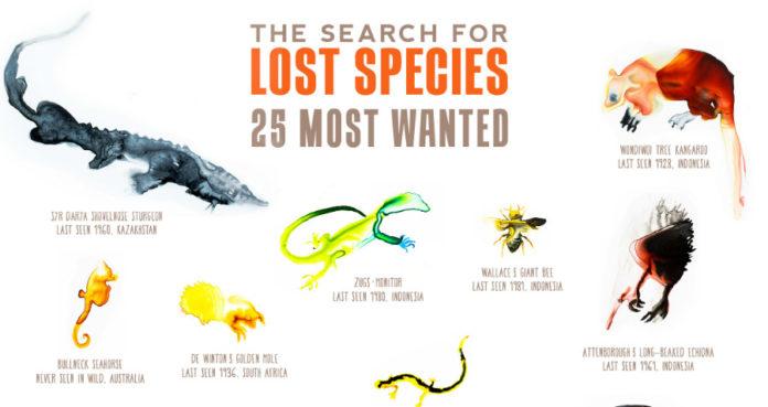 A campaña recolle o lugar e a data onde foron avistadas por última vez as especies. Foto: lostspecies.org.