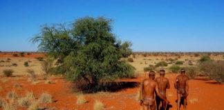 Membros da Tribu San, en Namibia.