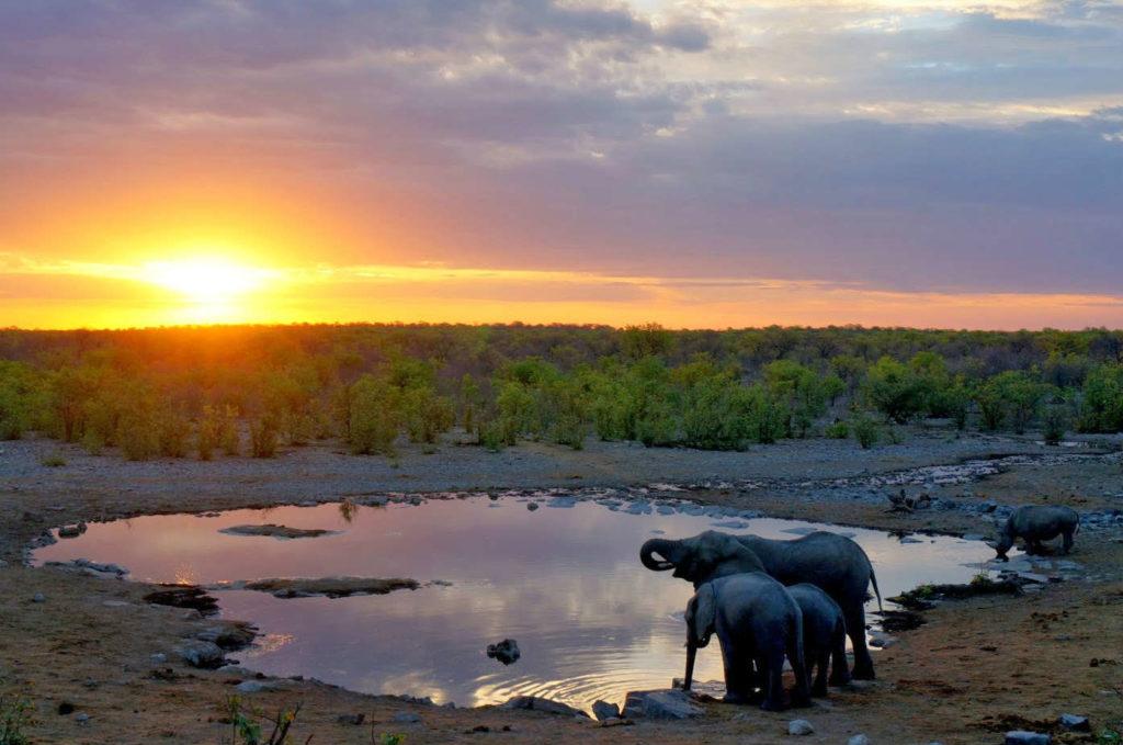 Tres elefantes e un rinoceronte negro beben nunha poza en Namibia.