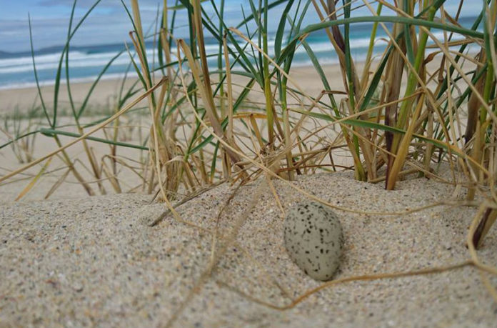 Niño de píllara das dunas atopado na praia de Baldaio (Carballo). Foto: Axena.