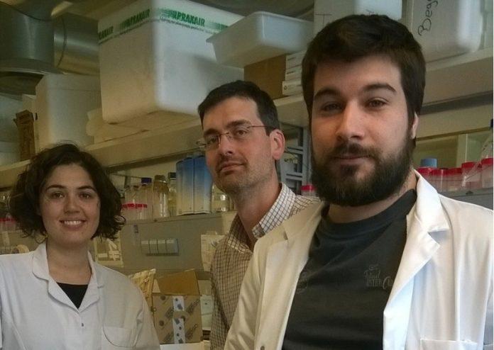 De dereita a esquerda, Daniel Beiroa, Rubén Nogueiras e Mónica Ibernom, asinantes do artigo recoñecido. Foto: USC