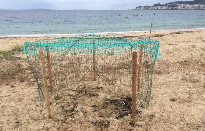 Os autores dos danos desfixeron a rede de protección e leváronse quince ovos. Foto: María Vidal.
