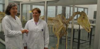 As investigadoras Matilde Lombardero e Mar Yllera, nun laboratorio da Facultade de Veterinaria. Foto: USC.