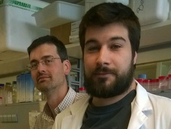 Rubén Nogueiras (esquerda) e Daniel Beiroa. Foto: USC.