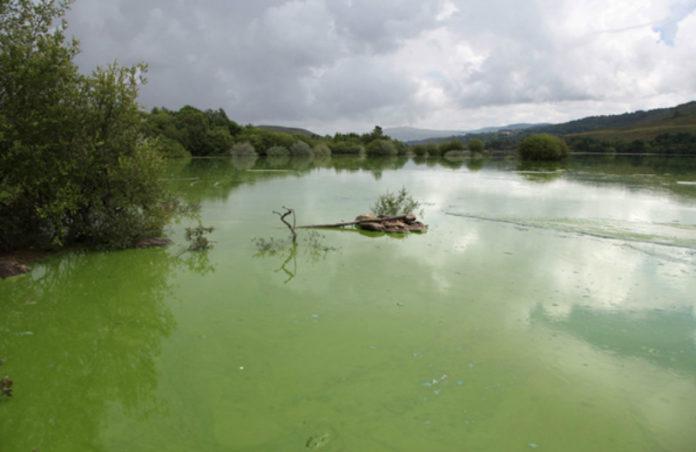Encoro das Conchas, na conca do Limia, que sufriu varios episodios de contaminación por cianobacterias debido ao aporte de nitróxeno e fósforo producido pola actividade gandeira.