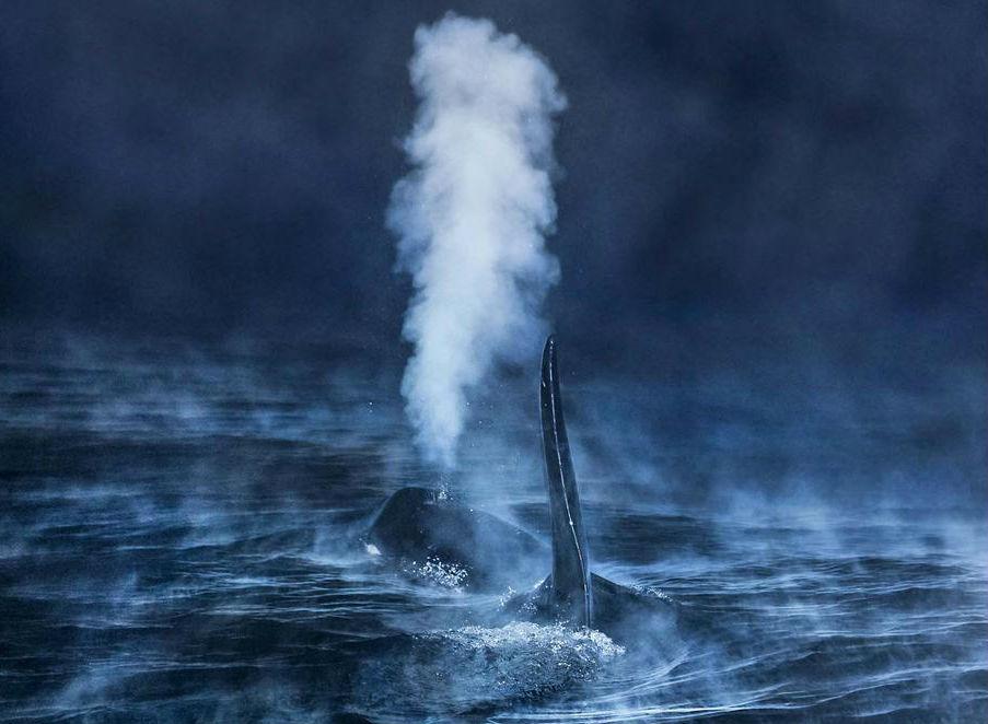 """A gañadora absoluta do concurso, """"Respirando na noite polar"""", de Audun Rikardsen (Noruega)."""