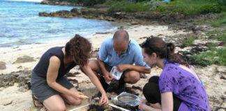 Investigadores de Ephemare, traballando nunha praia. No centro, Raimundo Blanco. Foto: Duvi.