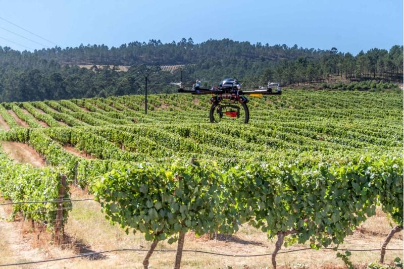 Un dron voa sobre unha plantación de videiras no Rosal. Foto: USC.
