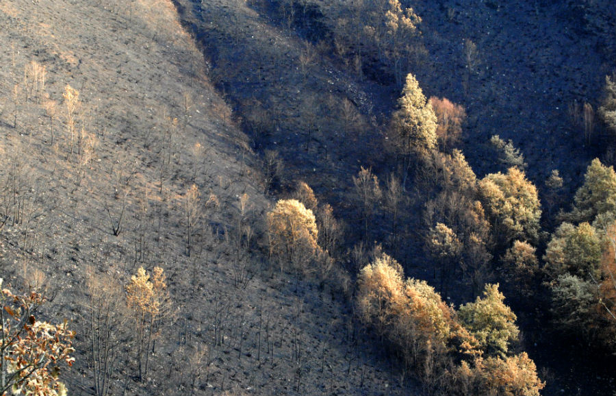 Ladeira queimada entre Cela e Noceda.