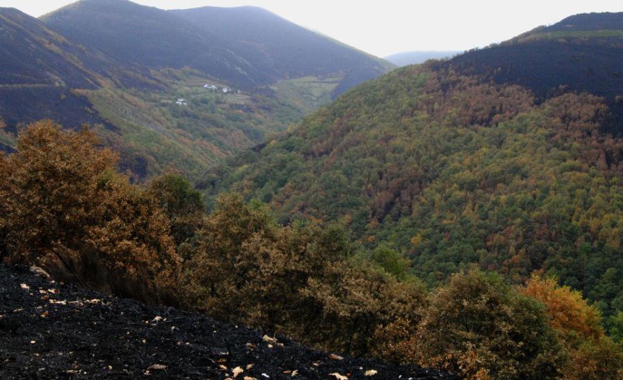 Os bosques caducifolios das ribeiras frearon o avance do lume en varios puntos.