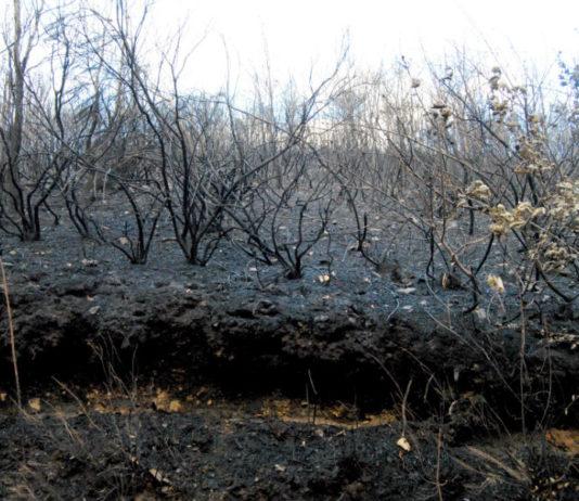 Monte dos Ancares afectado pola erosión tras os incendios de 2017. Foto: R. Pan.