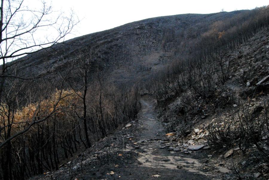 Monte arrasado xunto á estrada da Ucella.