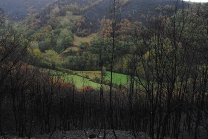 Os pasteiros e os bosques dos vales e ribeiras frearon nalgunhas zonas o avance do lume.