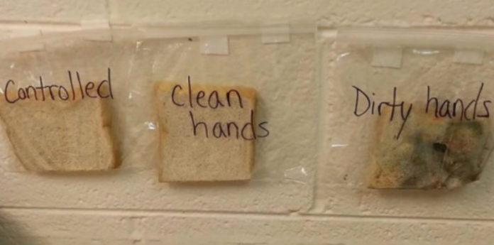 O bocadillo manipulado coas mans sucias, á dereita, o suxeito de control, e no centro, o bocadillo manipulado coas mans limpas. Foto: Donna Gil Allen.