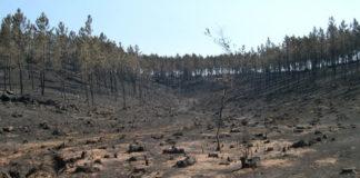 Efectos das lapas nun dos lumes analizados, que tivo lugar en Oia en 2013. Fonte: Duvi.