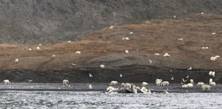 Imaxe tomada por membros da expedición turística. Foto: heritageexpeditions.com.