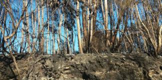 Monte de Pazos de Borbén afectado polos incendios. Foto: Duvi.