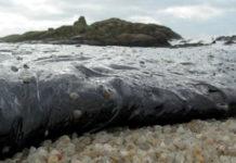 Numerosos científicos sostiveron que afastar o buque provocou que a marea negra afectase a centos de quilómetros de costa. Foto: Stéphane M. Grueso [CC BY-SA 3.0], via Wikimedia Commons.