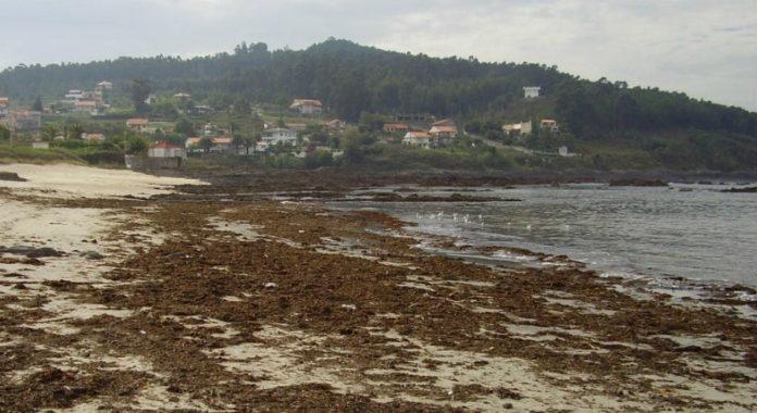 A tese advirte tamén da necesidade de mellorar a xestión biolóxica das praias máis turísticas. Foto: Duvi.