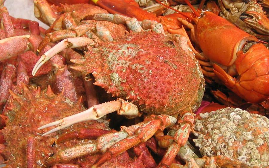 A lei afectará aos crustáceos decápodos, entre os que están as centolas, as lagostas e os lumbrigantes. Imaxe: Rafael Ortega Díaz / CC BY-SA 3.0.