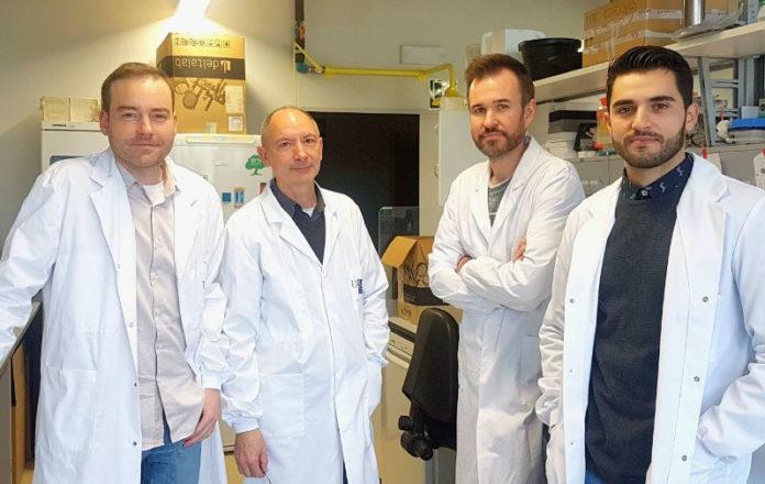 De esquerda a dereita: Samuel Seoane, Román Pérez Fernández, Juan Sendón e Anxo Martínez, investigadores do CiMUS. Foto: USC.