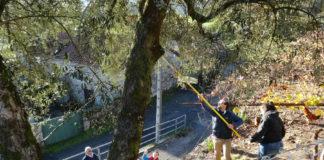 Traballo de campo dos investigadores do proxecto, xunto a unha das oliveiras estudadas. Foto: CSIC.