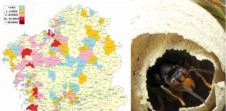 Mapa dos concellos onde se detectaron niños de 'Vespa velutina' no que vai de ano. Fonte: Medio Rural.