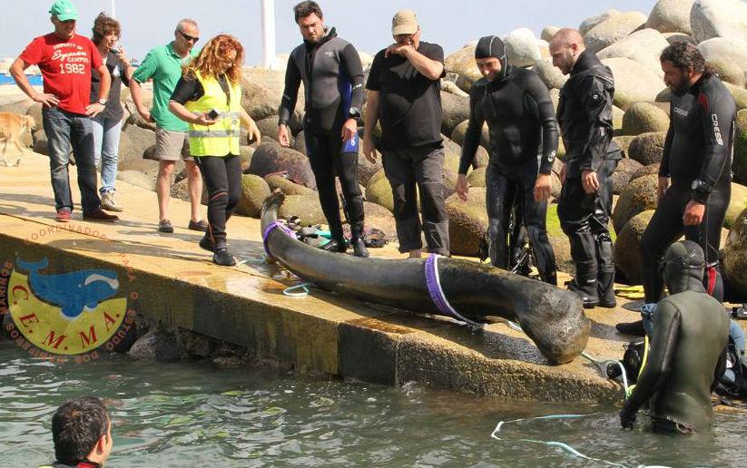 Recuperación dun dos ósos de baleas. Imaxe: Cemma.