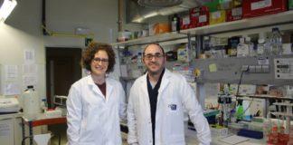 Miguel Fidalgo e Diana Guallar, investigadores do CiMUS que estudan as células nai. Foto: Paula Martínez Graña.