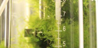A análise da contaminación a través do musgo poderá mellorar no futuro a saúde dos ecosistemas.