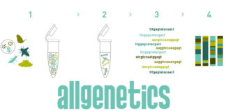 Procedemento do DNA metabarcoding. Fonte: AllGenetics.