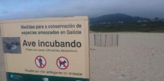 Decenas de pegadas humanas dentro dunha parcela protexida para os niños de píllara na praia de Razo, en Carballo. Foto: Manuel Mariño.