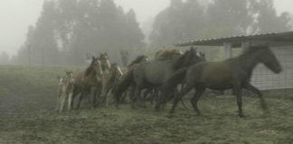 Traslado dos cabalos. Foto: Duvi.